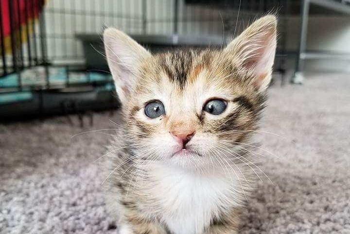 """""""斗鸡眼""""小猫无人收养,好心男子给它一个温暖的家"""
