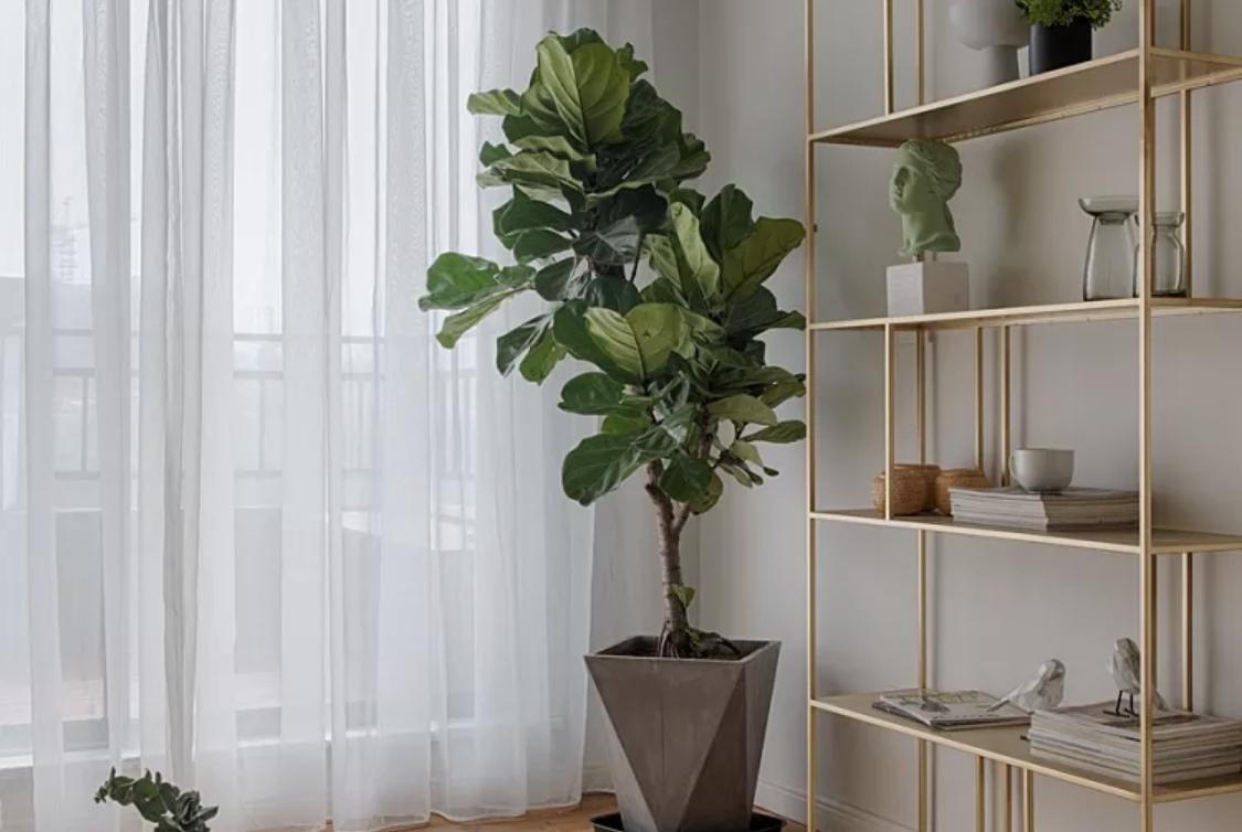 客厅养这10种植物,叶片油绿绿,净化空气还好养活!