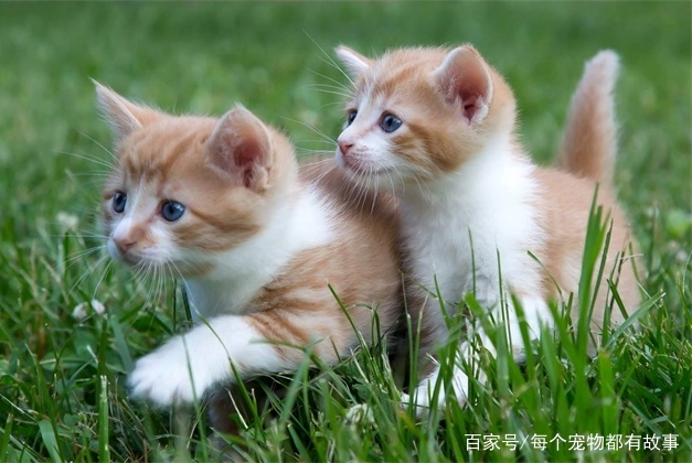"""猫咪交流的四种方式竟然不包括""""喵喵叫"""",大家觉得意外吗"""