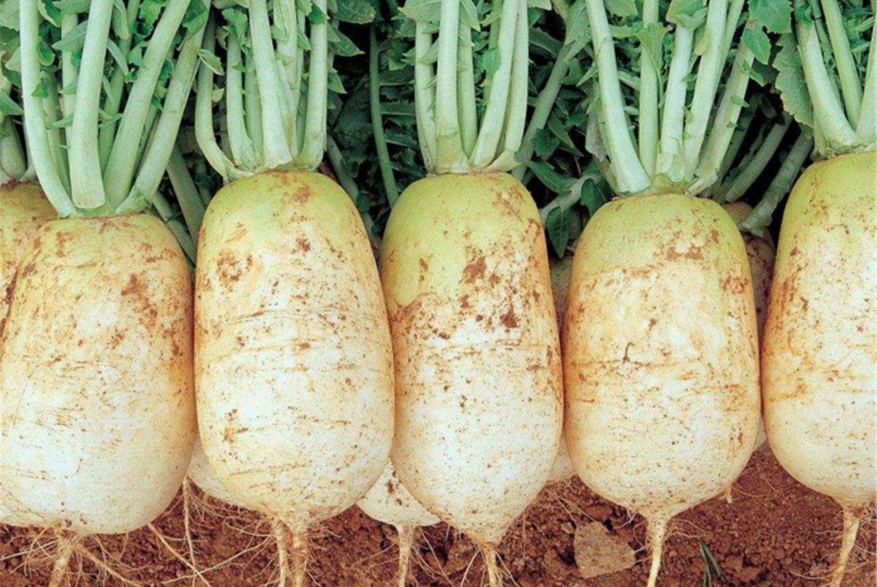 """萝卜碰上""""它"""",营养翻倍,缓解感冒,降下三高,滋养脾胃!"""