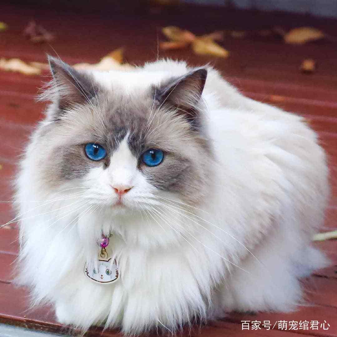 猫咪感到压力大很紧张图片