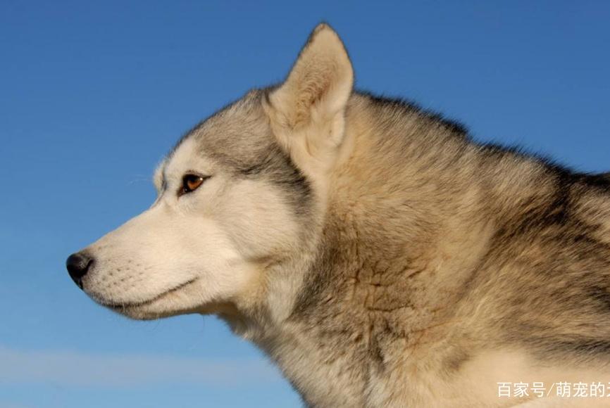 狗狗变成狼,主人无法接受欲送安乐,不曾想误打误撞过上幸福生活
