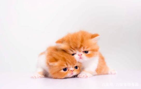 猫咪作为警惕性和疑心非常强的动物,通常是很少把自己最放松的状态表现在人们面前的,可无论它们天性怎样胆小敏感,也抗不住众多喜爱萌猫的铲屎官们一点点用爱心感化它们,让它们呈现出舒服的状态,今天我就来了解一下猫咪在放松情况下有哪些表现。  第一点;肢体动作 猫咪在舒服的时候肌肉会很放松,身体的毛发也是蓬松的状态,而且猫咪的肢体会很摆出展开的动作,甚至会漏出柔软的小肚子,尾巴也会缓慢的轻轻摆动,当你撸猫时猫咪有时会舔你或者用毛绒绒的身体蹭你,它想表达意思就是,我很舒服,快点继续。  第二点;眯眼 铲屎官在抚摸猫咪