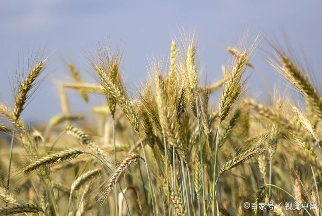 春播来临:玉米价格这一轮的下跌,给市场传递啥信息?