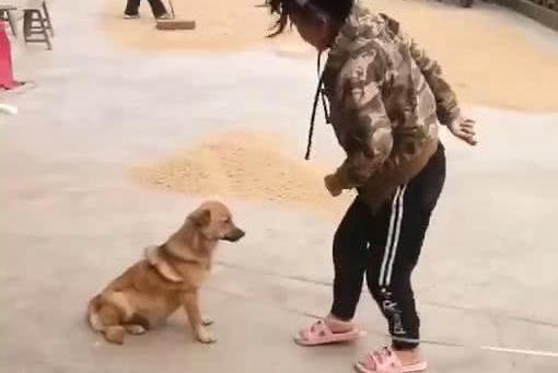 宝宝用跳绳捆住狗,接下来的举动让人哭笑不得,狗:做条狗真累啊