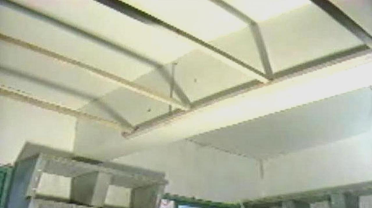 肉鸽养殖前景,视频来教你肉鸽养殖技术大全