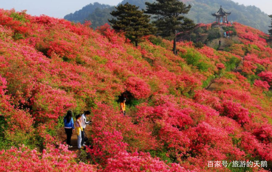 麻城市龟峰山风景区