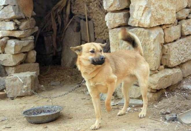 让人气愤的偷狗贼!偷狗遭村民围堵,全程捂脸不让拍,表示不好看