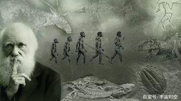 达尔文的进化论是真理还是猜测?你怎么看?