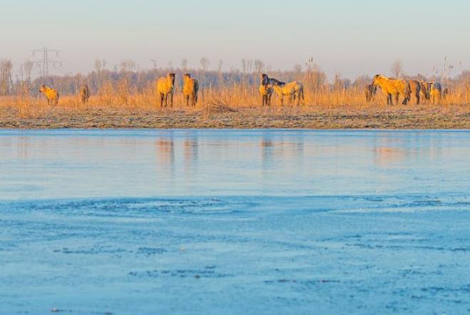 大鹅在结冰湖面行走,一路打滑走出搞笑步伐,引众人围观!