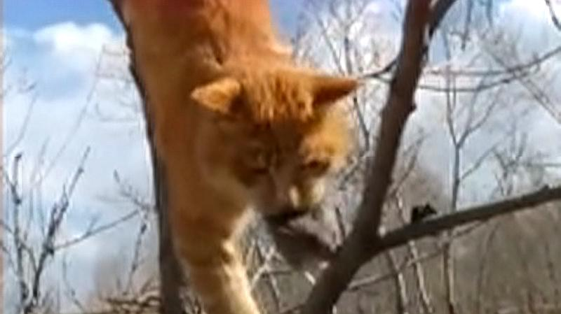 为了捉只老鼠,猫咪连上树的本事都会了