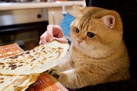 为什么橘猫千万不能养,为什么十个橘猫九个胖,原来是这样!