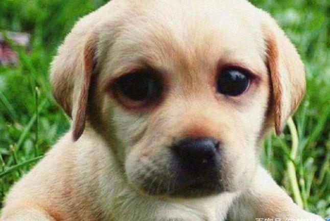 饲养幼犬时,宠主不要做这5件事,新手学会了省不少事!