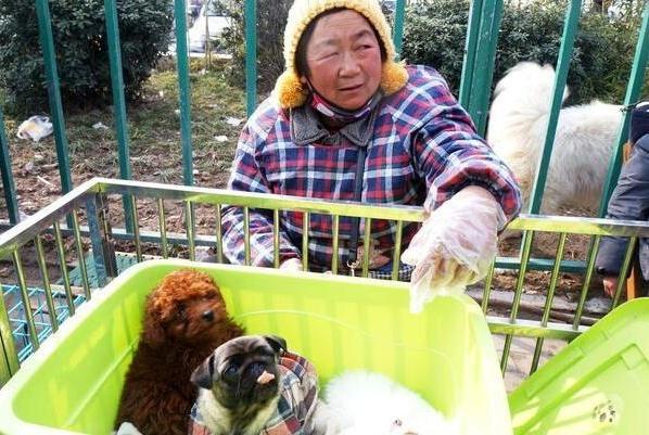 """挑选狗狗要注意,只需这5招,避免挑到""""星期狗""""!"""