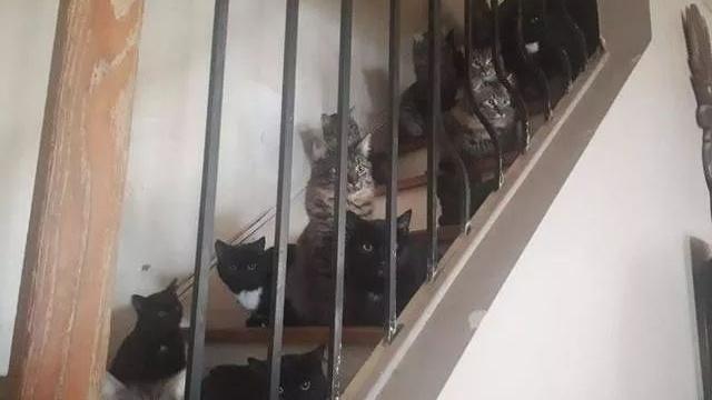 没有给猫绝育的后果,2只猫变120只,家里的每个角落都是猫!