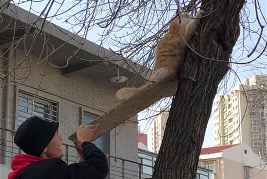 大橘猫爬到树上下不来,抱着树干焦急喵叫,好心人的举动暖心了…