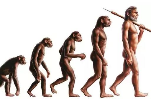 为什么猴子无法进化成人类?发生了什么?