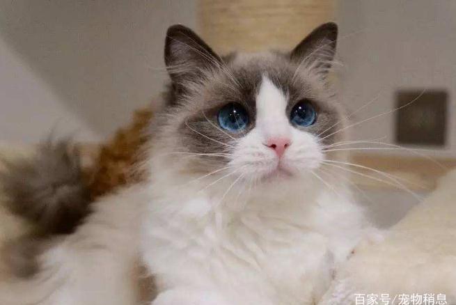 养猫的5个潜规则,只有懂得了才能把猫咪养得更好,你知道几个?
