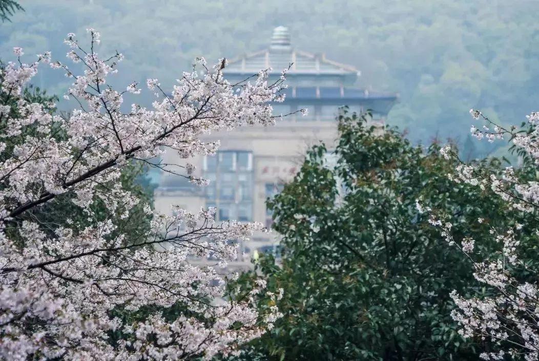 武汉27家景区邀你免费游!