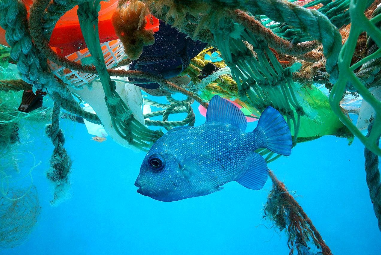 塑料污染无孔不入,连海底10000米深处的动物,都摄入了塑料