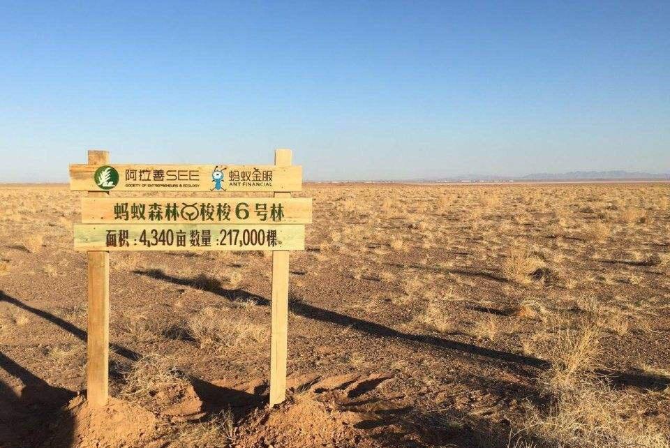 马云推出蚂蚁森林的原因被正式确认,中国绿化面积说明一切