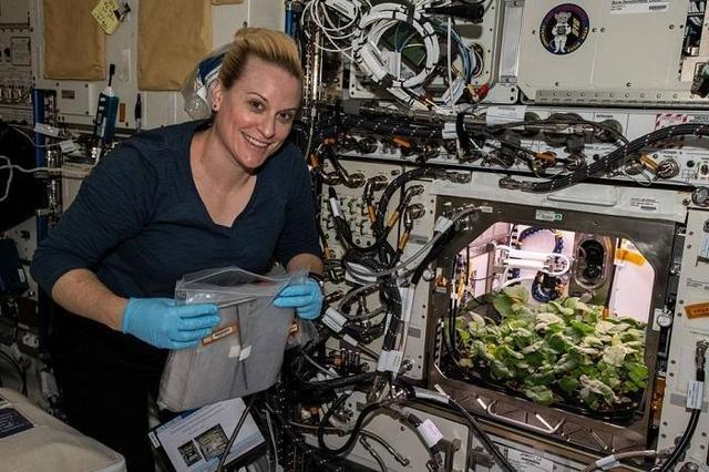 NASA收获史上首批太空萝卜 太空萝卜长什么样子?