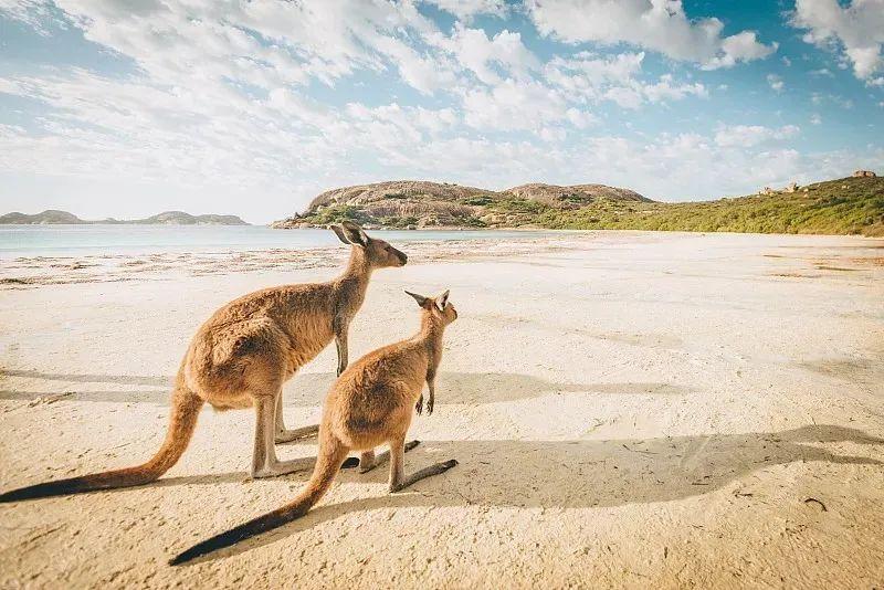 【移民动态】澳洲GTI(858)签证变政了,申请条件更新,学历要求增加!