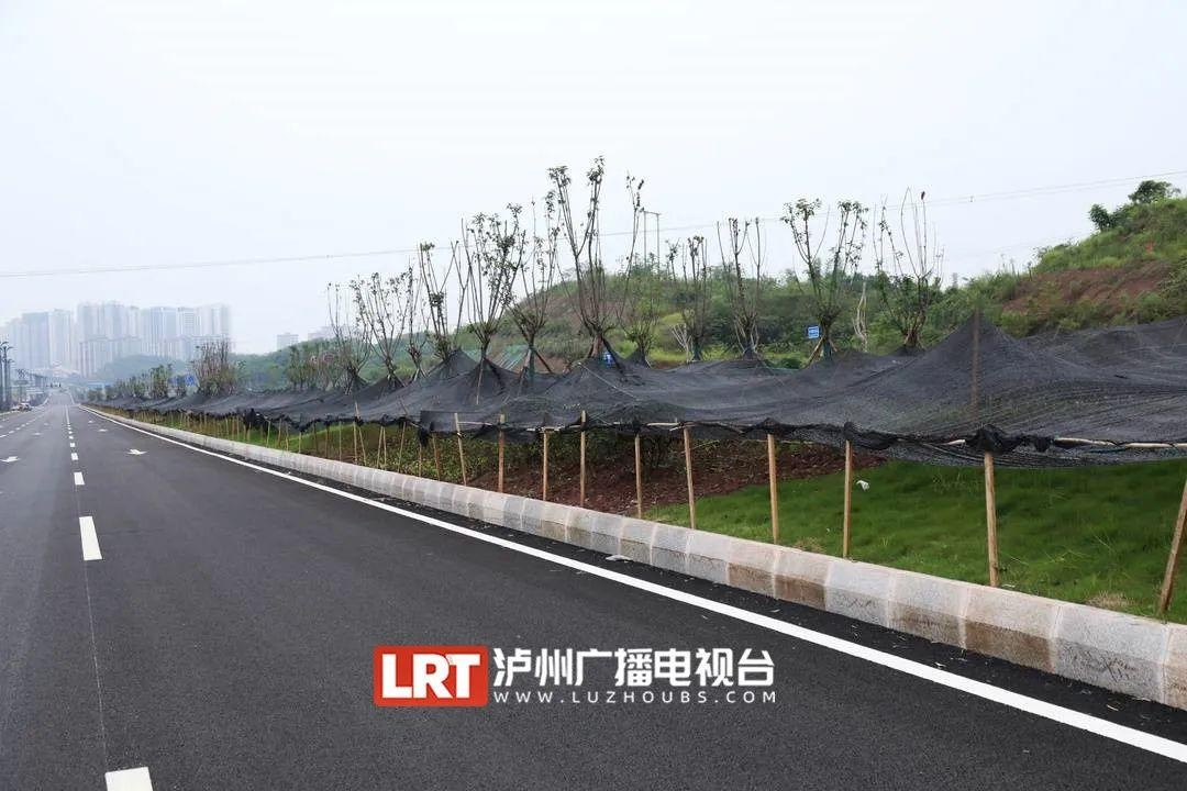 泸州城区飙到方山吸氧  只需10多分钟(图8)