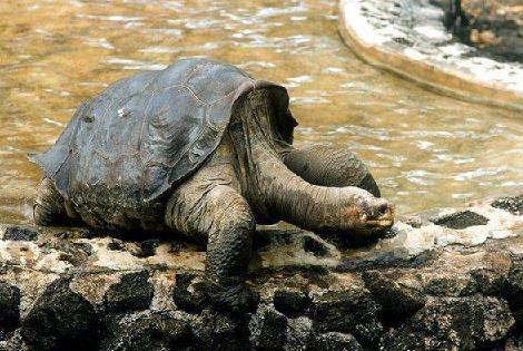 近代灭绝的5种珍贵动物,图3从人类发现至灭绝只有一年