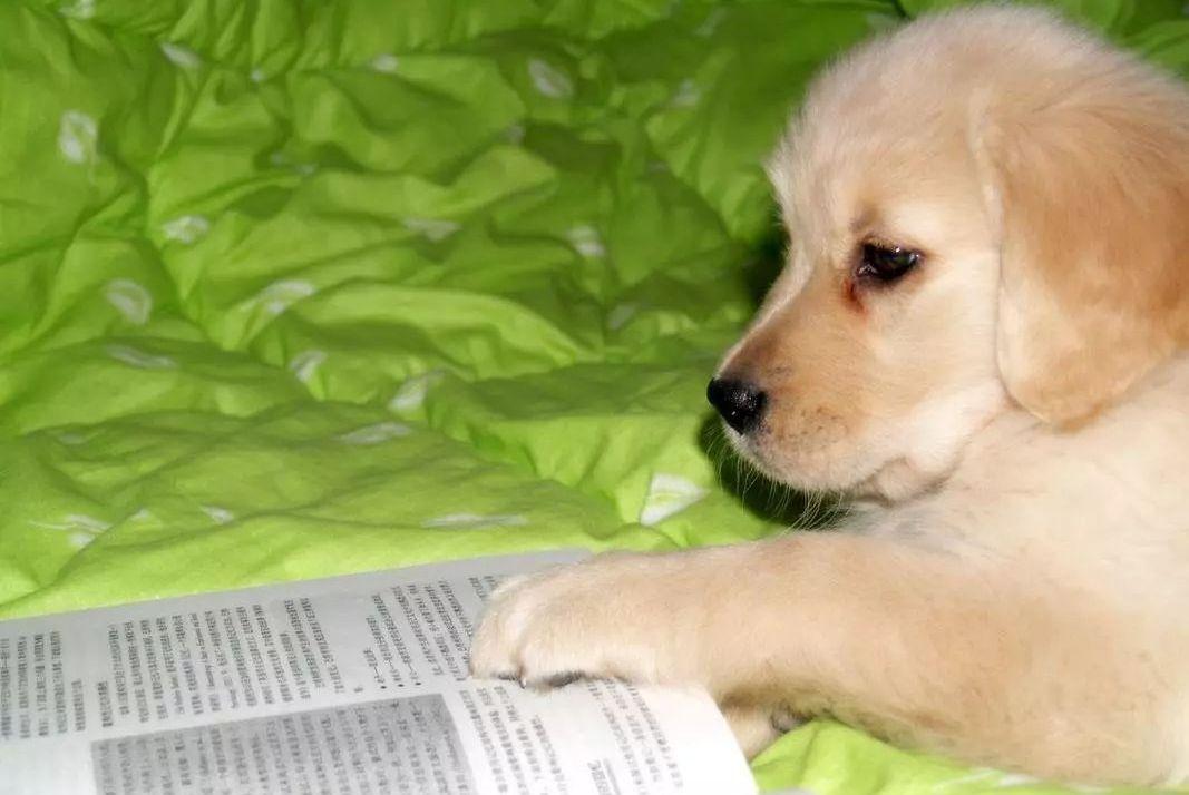 家长们辅导作业纷纷崩溃,无奈只能让家里的狗子上场……