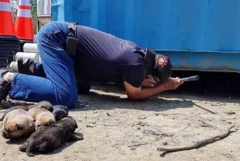 工人正在施工,流浪狗狗却用身体挡住吊车,他蹲下一看,原来……
