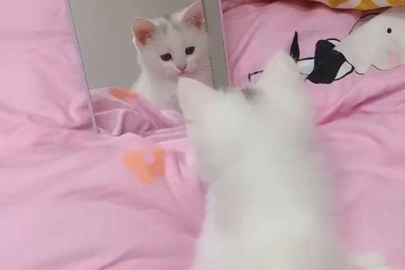 猫咪偷偷照镜子臭美,太可爱了,猫:要被自己美哭了