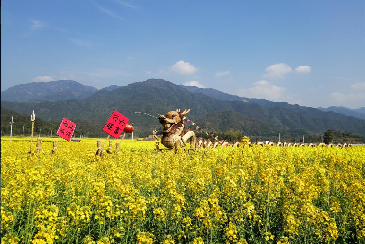 稻草人是油菜花节的标配,浙江仙居油菜花美的不像话了