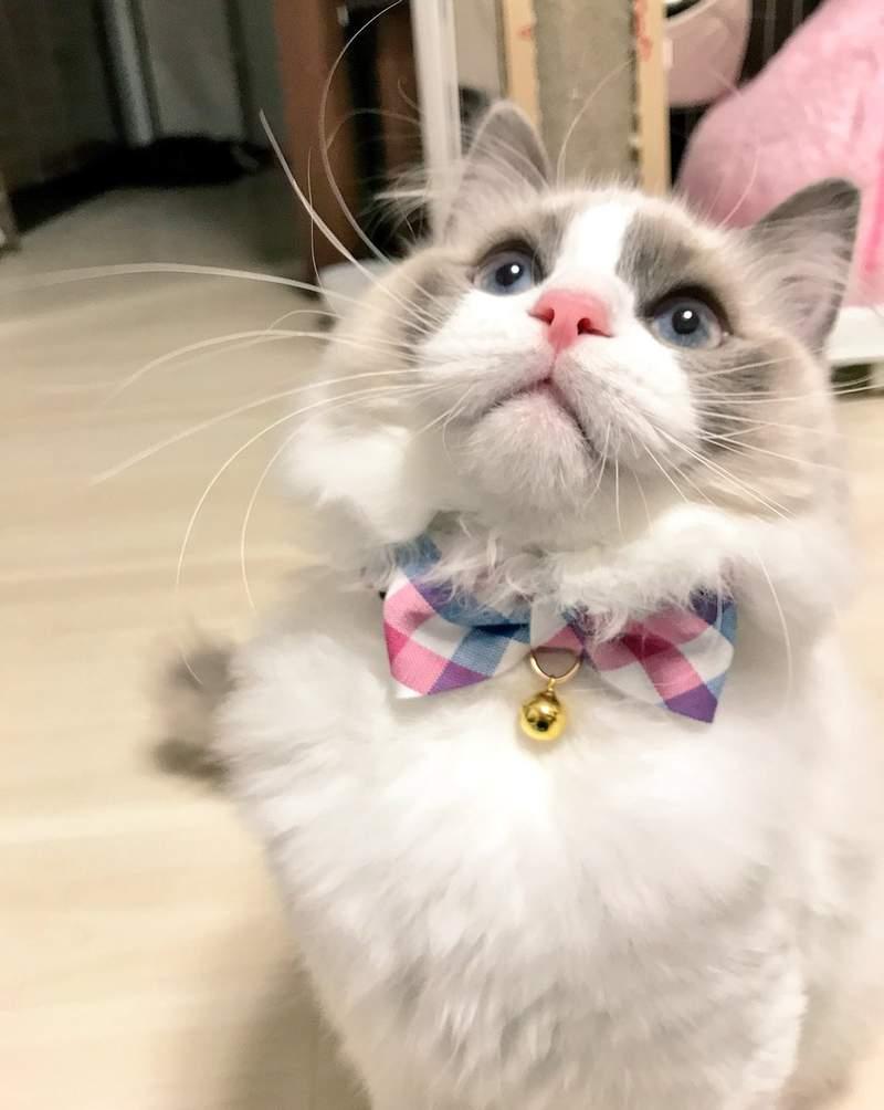 猫咪项圈挑选攻略,教你如何挑选合适的猫咪项圈,前方