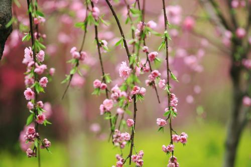 春天到了,10首关于春天的诗词带你走进春天,赶紧收藏!