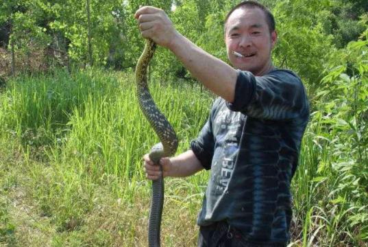 """农村俗语""""见蛇不打三分罪""""是什么意思?"""