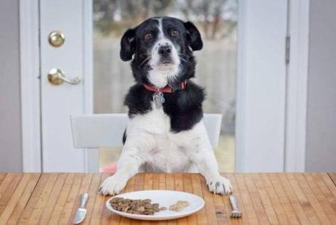 狗狗吃太咸有可能会导致中毒!铲屎官们注意了!