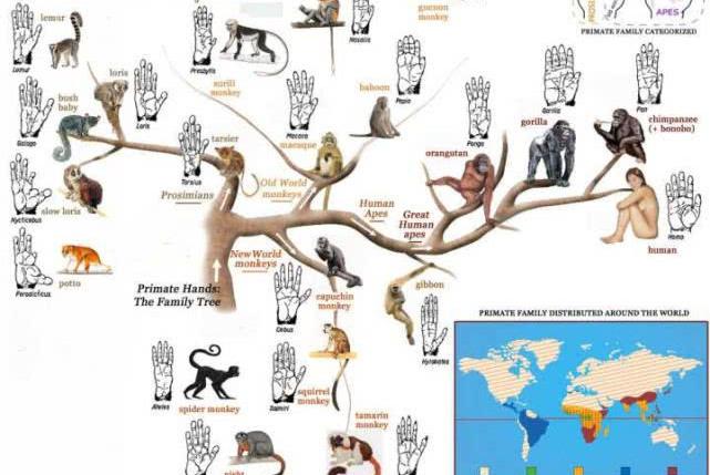 如果没有人类,地球上其他物种会进化出智慧文明吗?