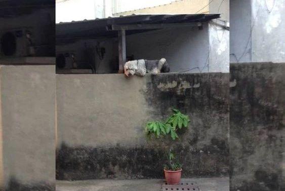 狗狗总爱爬墙头,路人表示太吓人,宠主道明背后原因让人泪目