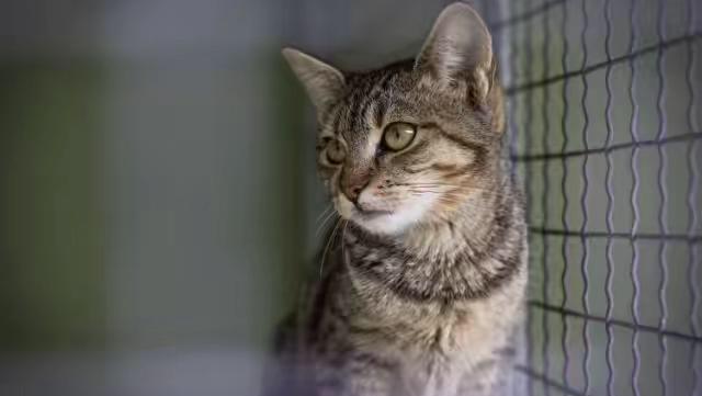 动物实验:美国有关当局用猫肉来喂养猫