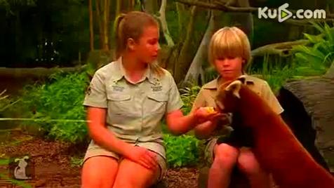 旅行偶遇搞笑的毛毛熊来要吃的,这是浣熊还是小熊猫?