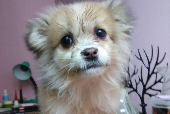 狗狗被收养后再次流浪,一封信和一个窝,最终被好心人带回家