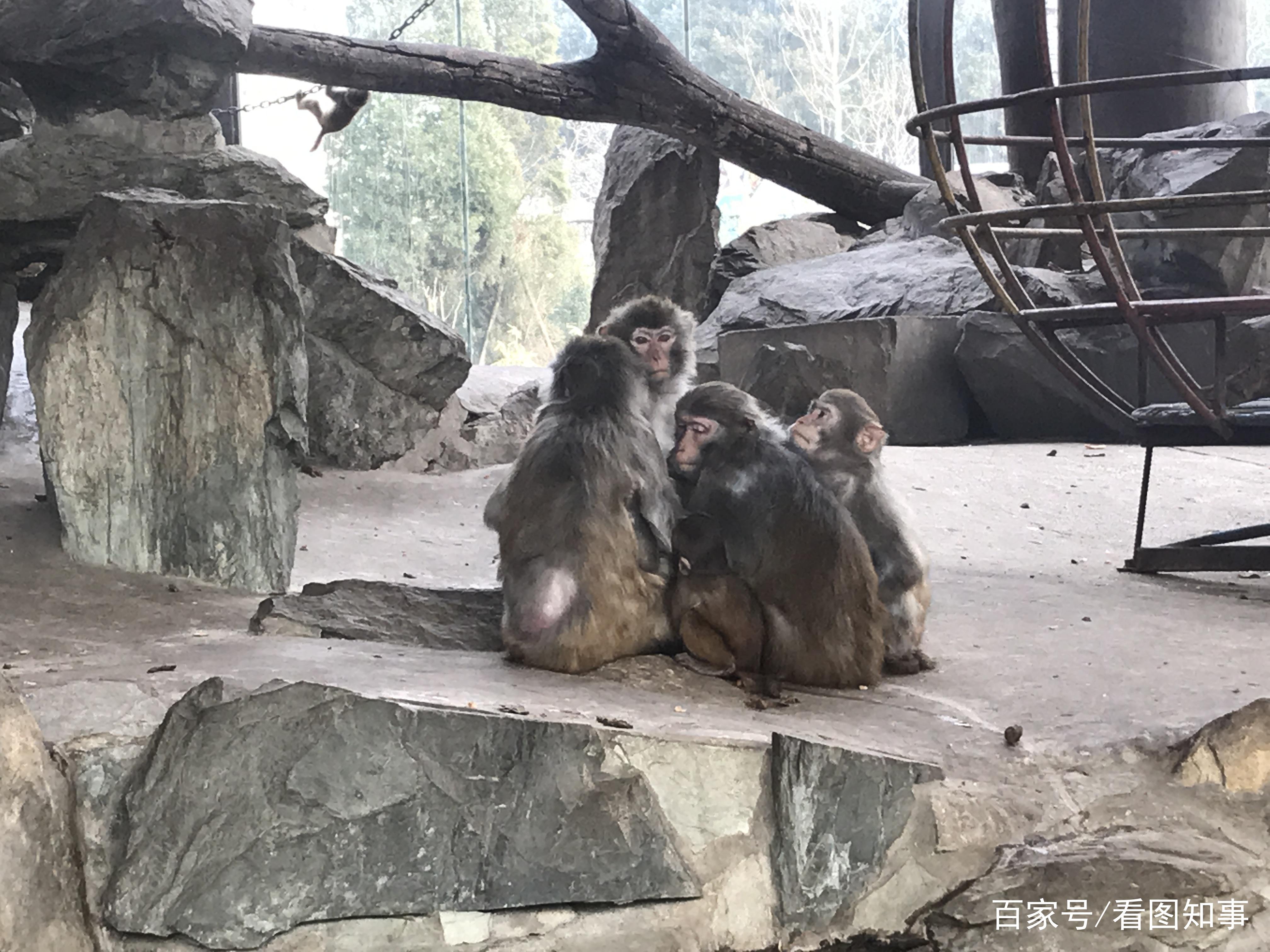 """10℃!北京动物园猴子们相互依偎""""抱团取暖"""""""