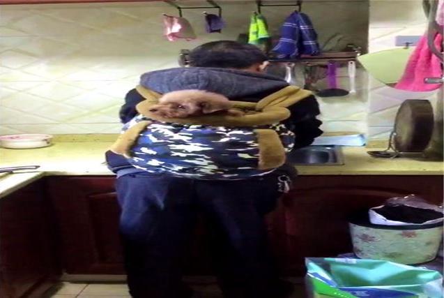 老爸为了照顾生病的泰迪,把它放在背篓里面,像亲孙子一样疼爱着