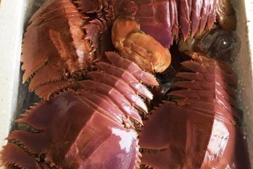 """在日本品尝""""怪物虾"""",比龙虾还贵,却是日本人的最爱,你敢吃吗"""