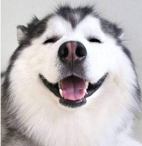 狗狗知识百科