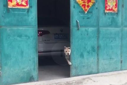 狗狗监视网友举动,直到主人出来后,这才解除目光锁定!