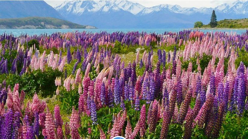 世界上很漂亮的七种野花,当全部盛开时,如一副美丽的画卷