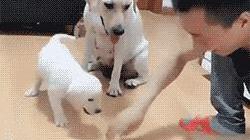 每日一笑,不许动我的熊熊!