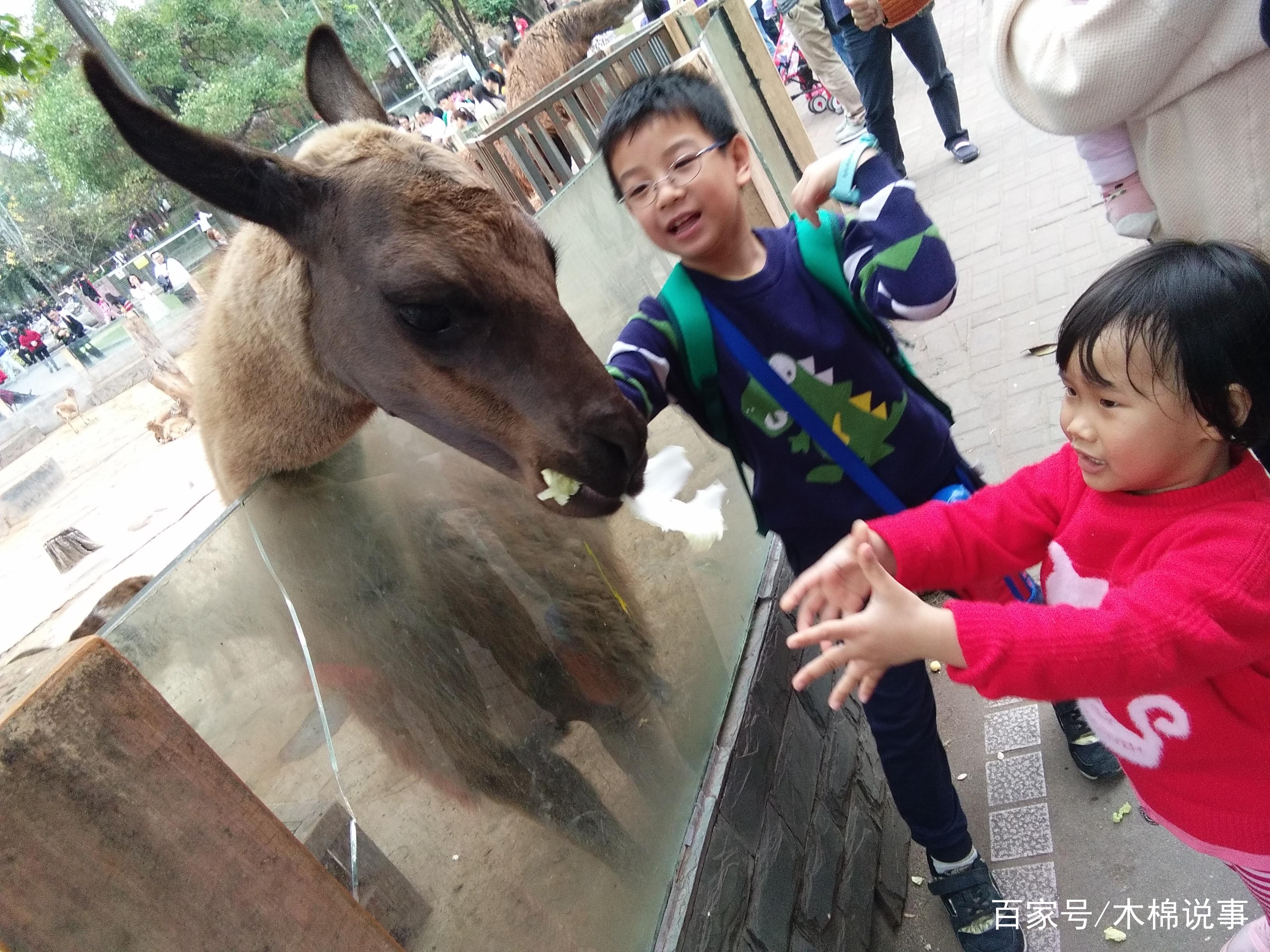 儿童的乐园——广州市动物园